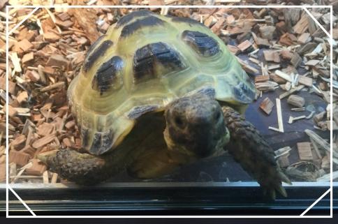 tortoiseblogfacebookgoogle
