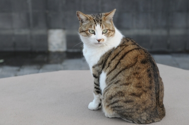 A brown and white tabby was discovered in a shipping container from Limassol