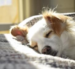 DOG ASLEEP IN BED - pexels-photo-731022 - CUTTT