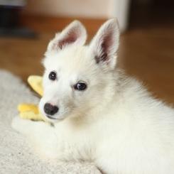 SMALL DOG ON FLOOR pexels-photo-846083
